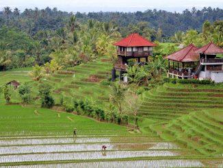 À la découverte de deux îles indonésiennes et de leurs merveilles