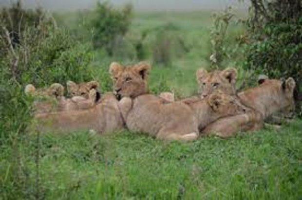 safari au Kenya et en Afrique du Sud