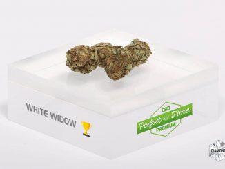 CBD et cannabis légal